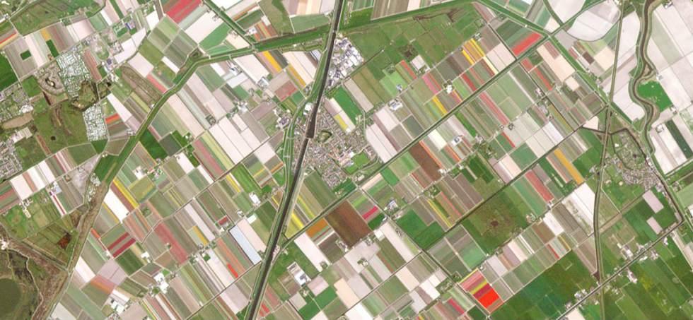 Tulipanmarker i foråret, Holland / planet.com